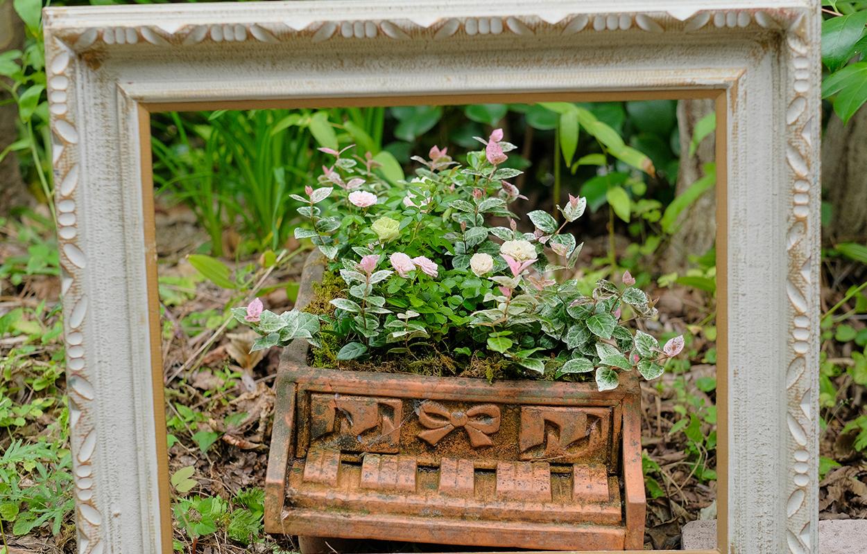 額縁と小さな花のついた植物の画像
